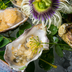 Goose point oyster